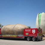 Largest Pistachio Nut- Alamogordo, NM